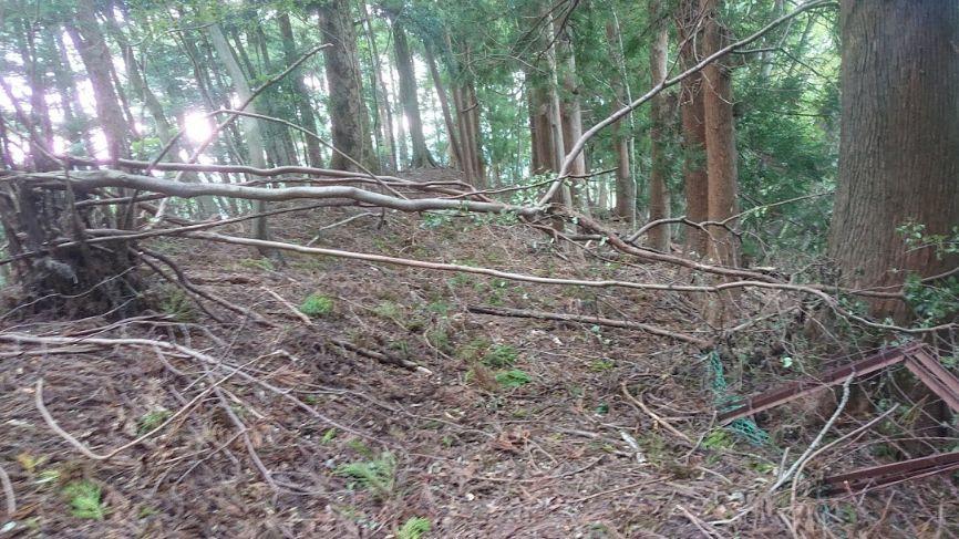 倒木の下山道