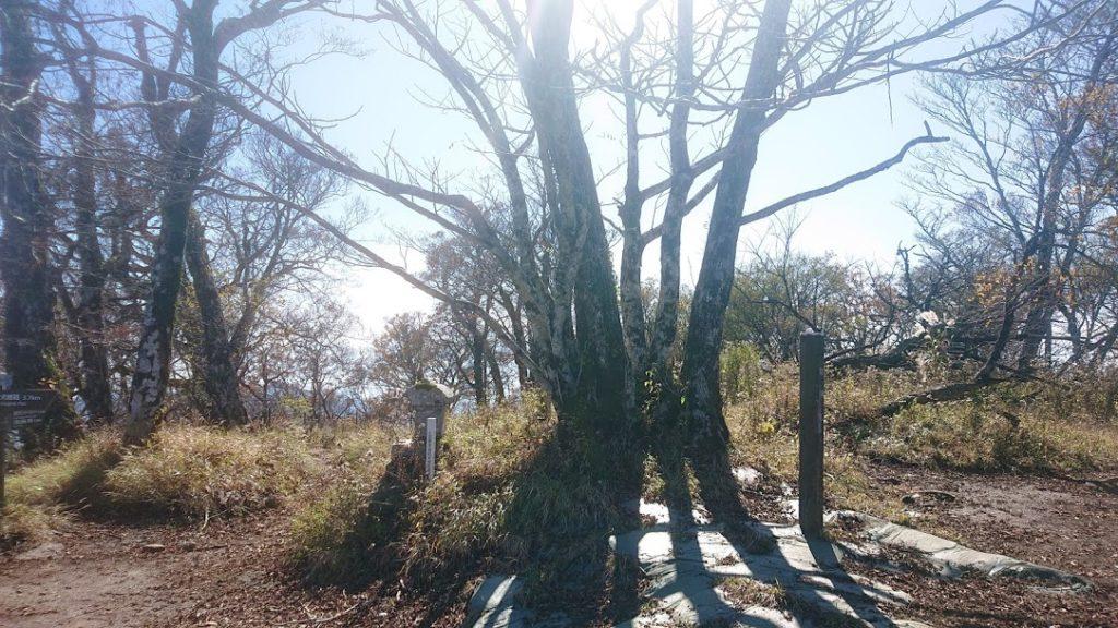 檜洞丸の標識
