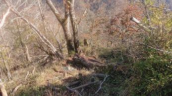 丹沢主稜縦走の登山道1