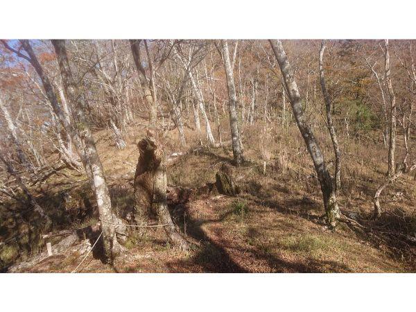 丹沢主稜縦走の登山道3
