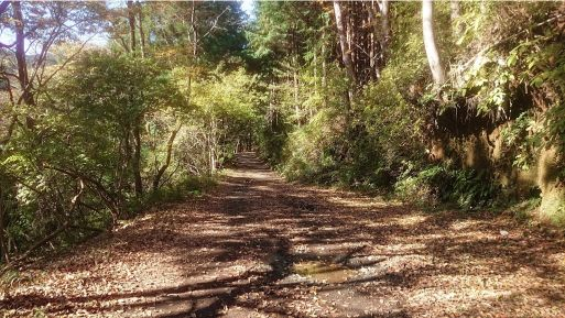 西山林道4