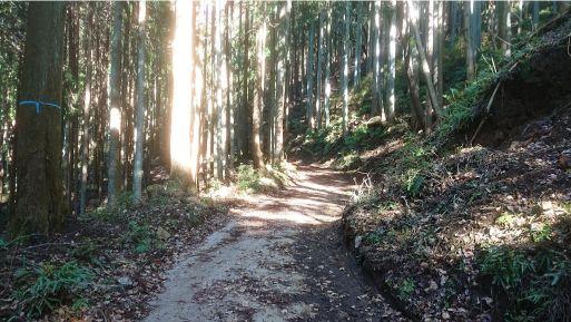 西山林道3