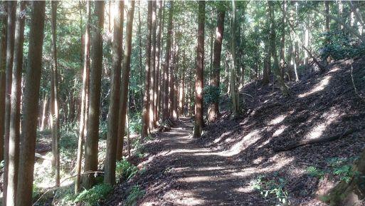 西山林道1