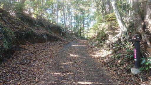 西山林道2