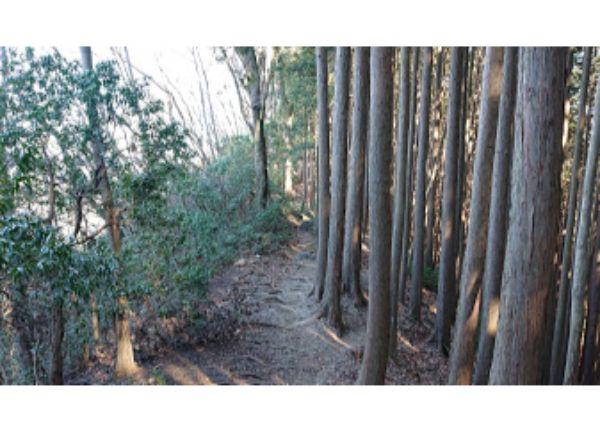 棒ノ折山からの下山道3