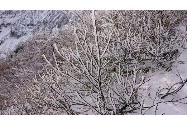 小さな樹氷