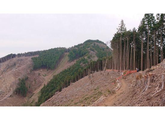 惣岳山への尾根