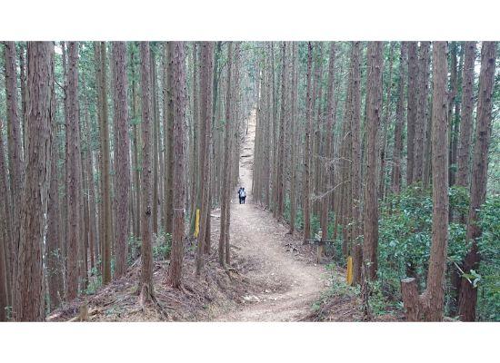 惣岳山からの登山道2