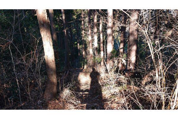 三本松山への登山道