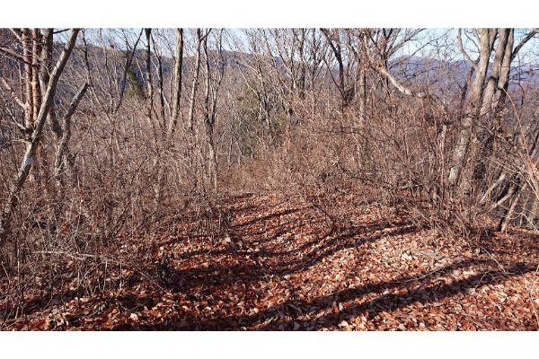 三本松山への登山道3