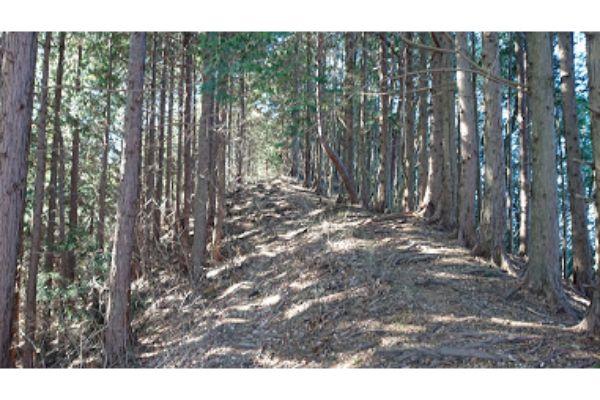 三本松山からの登山道3