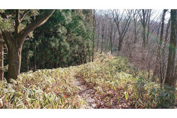 三本松山からの登山道4