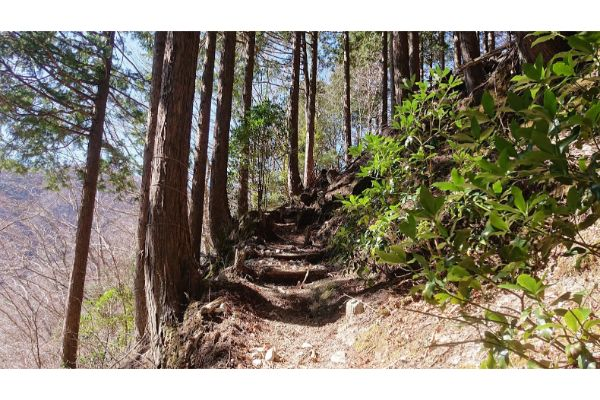 畦ヶ丸への登山道5