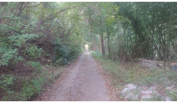登山道らしくなってきた道2