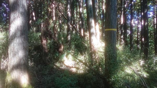 ブッシュ平の藪3