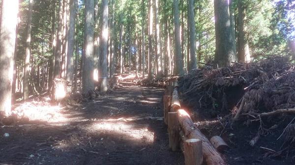 不要な林道