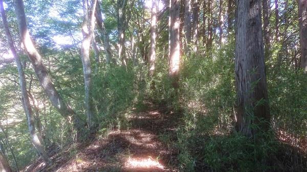 ブッシュ平の藪1