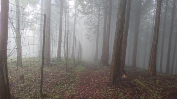 不老山の鹿柵