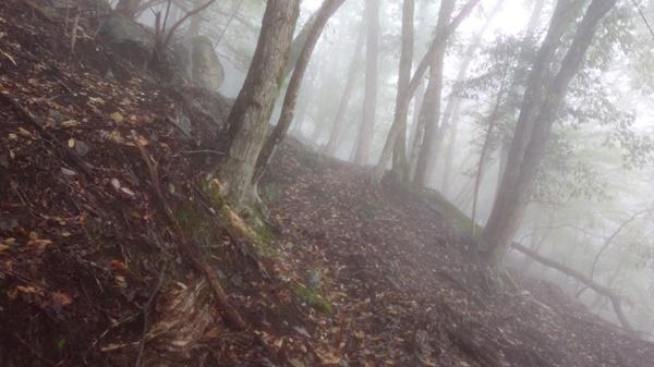 荒れた不老山登山道2