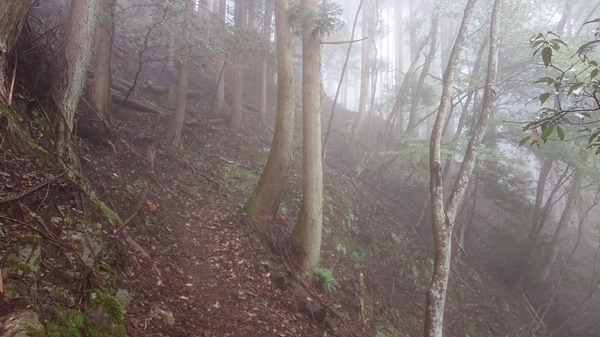 整備された不老山の登山道2